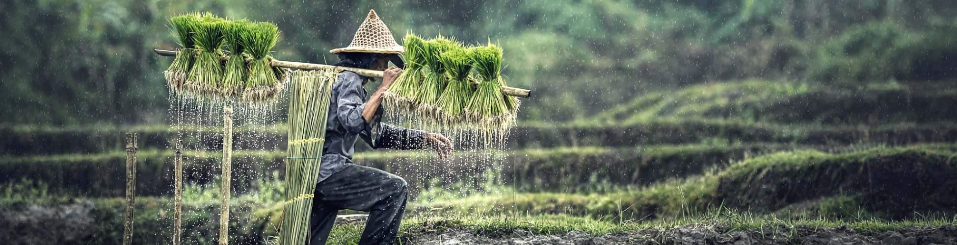 cambodian-countryside-battambang-rice-paddies-adventure