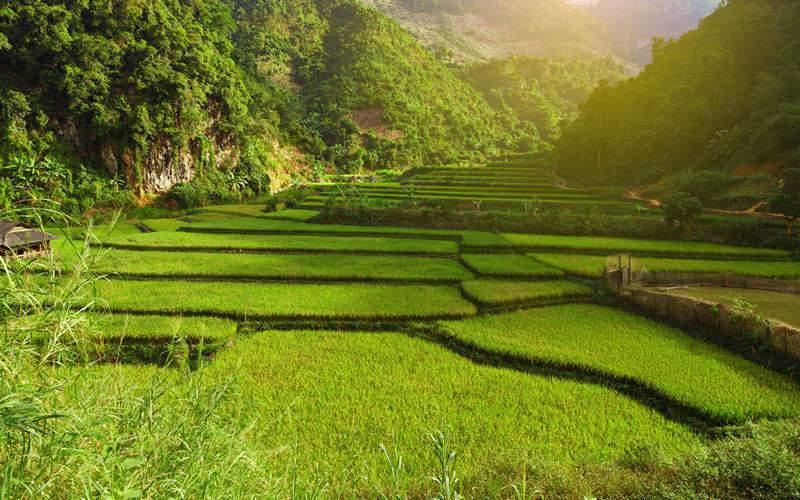 Rice Field in Mai Chau
