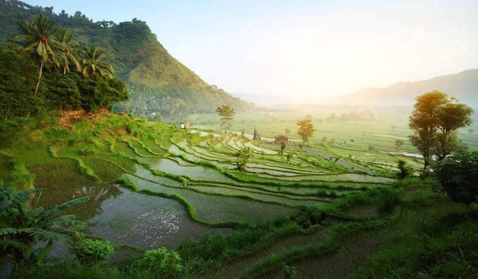 Indonesia Rice Terrace