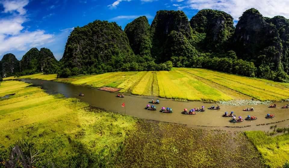 Campos arrozales de Tam Coc - Bich Dong