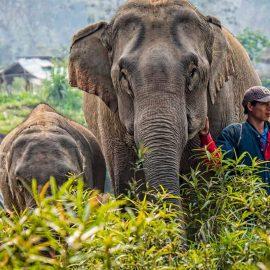 mandalao elephant reservation center