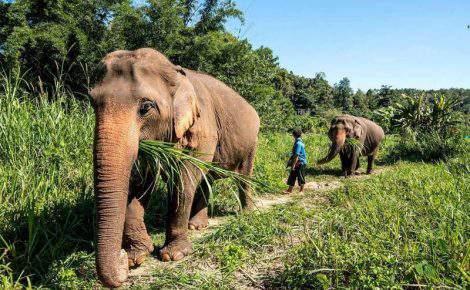 Laos Clássico