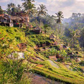 Terrazas arrozales de Ubud