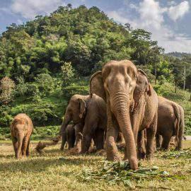 Parque natural de los elefantes