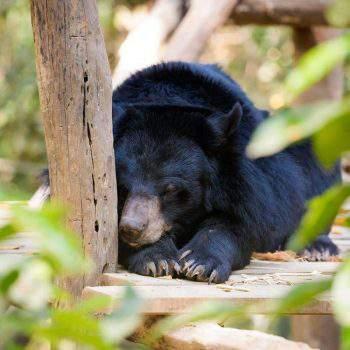 Kuang Si Bear Rescue Sanctuary