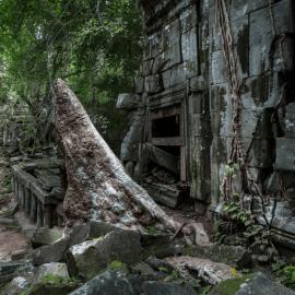 Jungle covered Beng Mealea