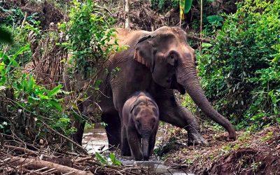 Excursão de um dia com Kuang Si Waterfall e campo Elefante Mandalao com guia falante de espanhol