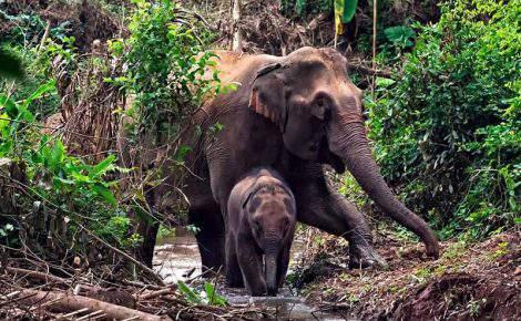 Kuang Si Waterfall & Santuarios de elefantes MandaLaos día completo con guía de habla hispana