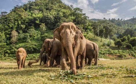 Viaje a Tailandia y Myanmar en 13 dias.