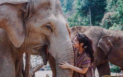 Melhores templos em Chiang Mai com santuário de elefantes e guia em português