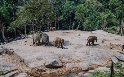 Excursión de día completo al Santuario de Elefantes con guía en español